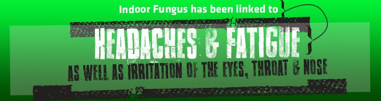 IAQ-fungus