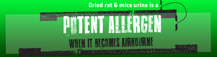 rodents and indoor air quality